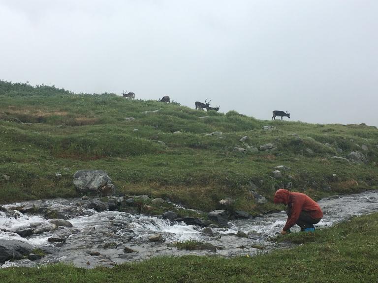 8.Pia diskar i sällskap med renar