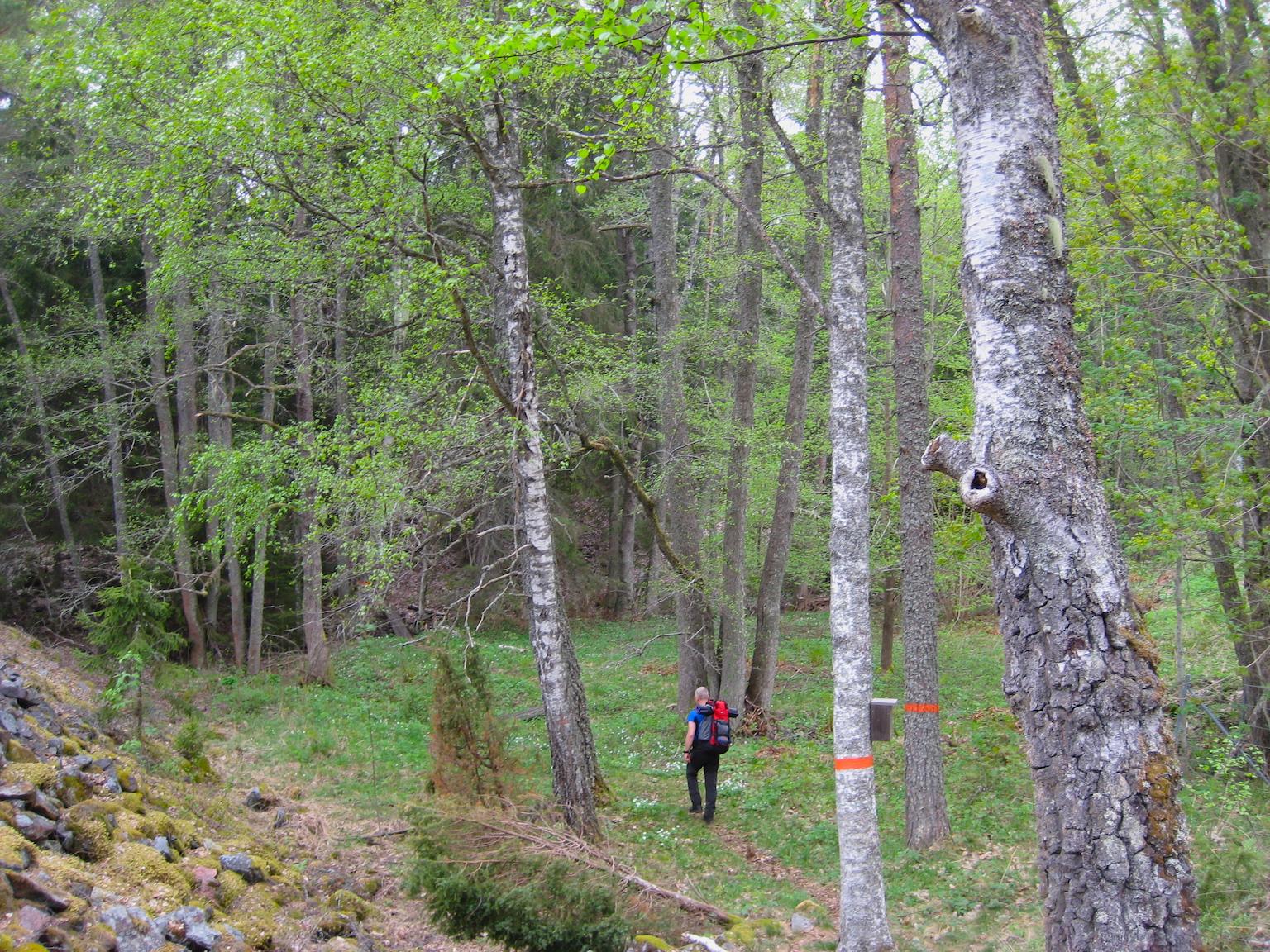 Skogen_liten