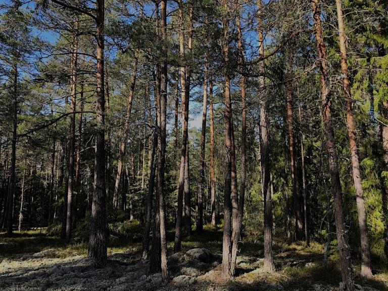 1.Bara träd_liten